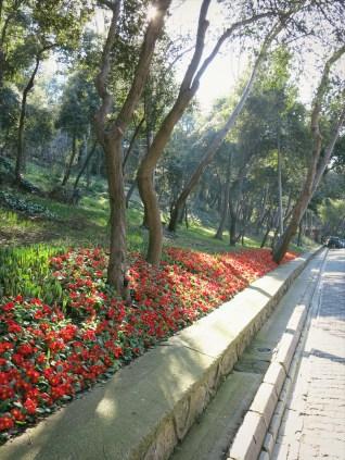 Flowers in Fetihpaşa Korusu
