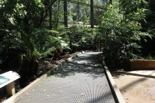 lyrebird-enclosure