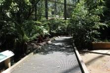 lyrebird-enclosure
