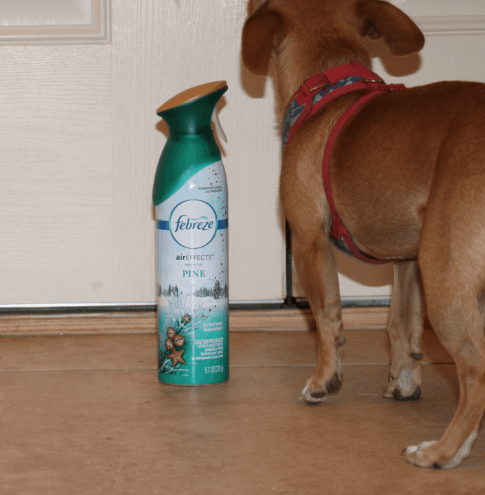 How to Keep your House Smelling Good - #12Stinks of Christmas