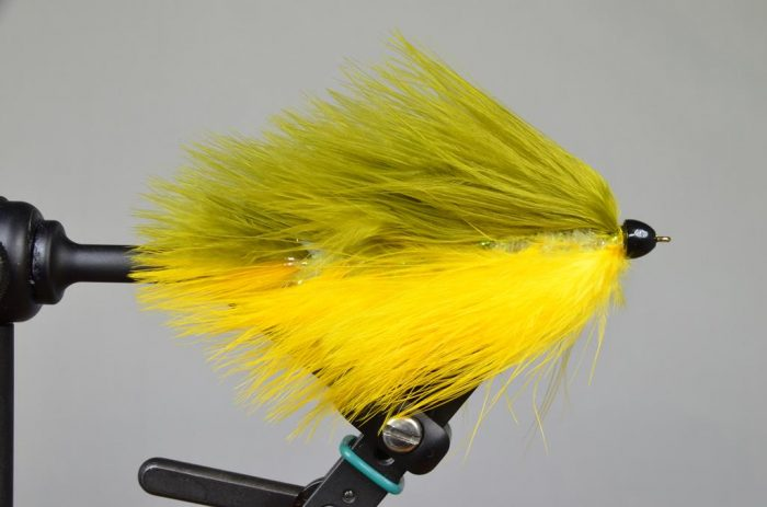 galloup's barely legal conehead olive yellow