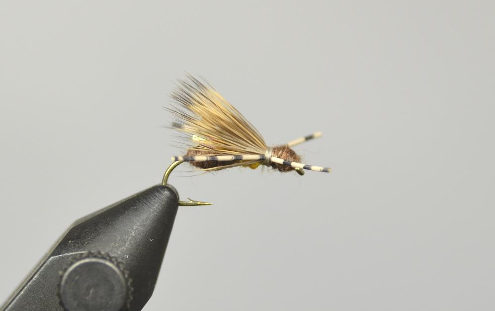 galloup's ant acid fly brown