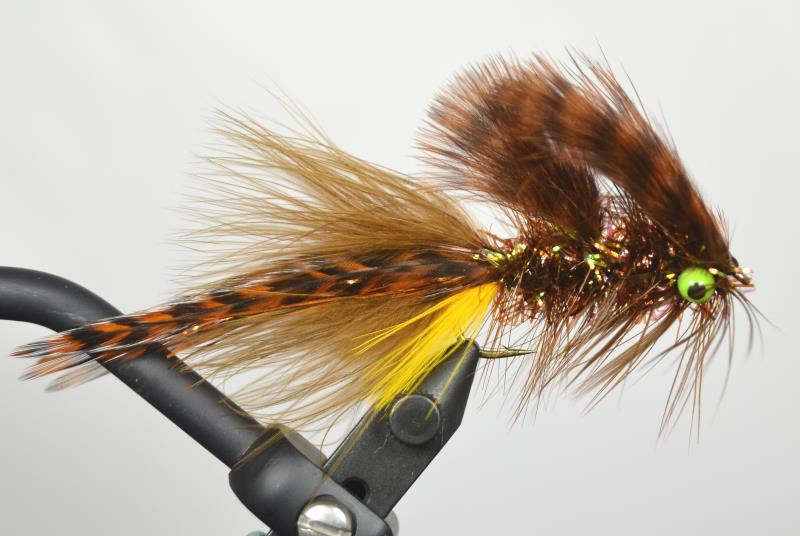 galloup's sump brown