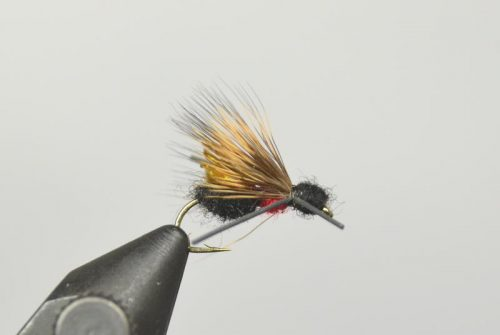 galloup's ant acid fly