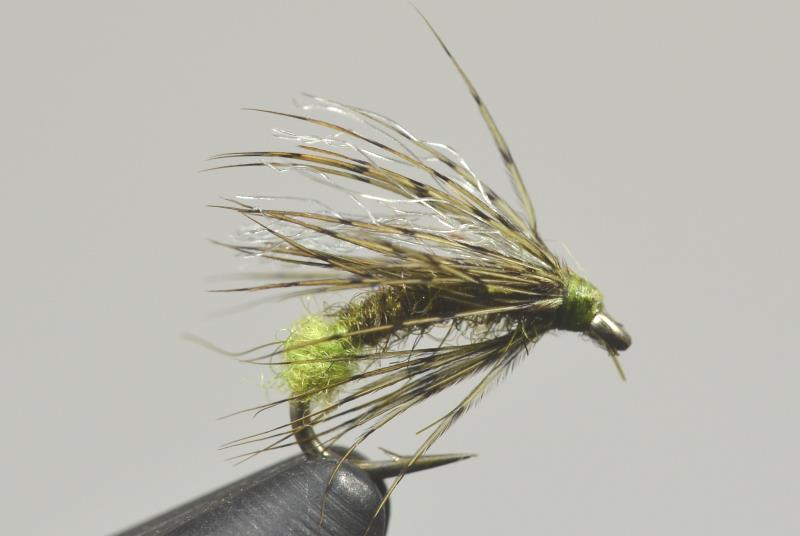 galloups downed caddis olive