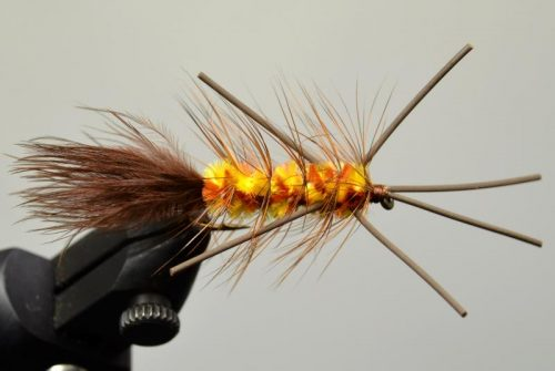 galloup's warbird brown yellow
