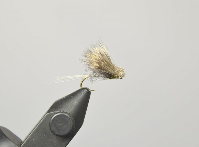 galloup's Found Link BWO