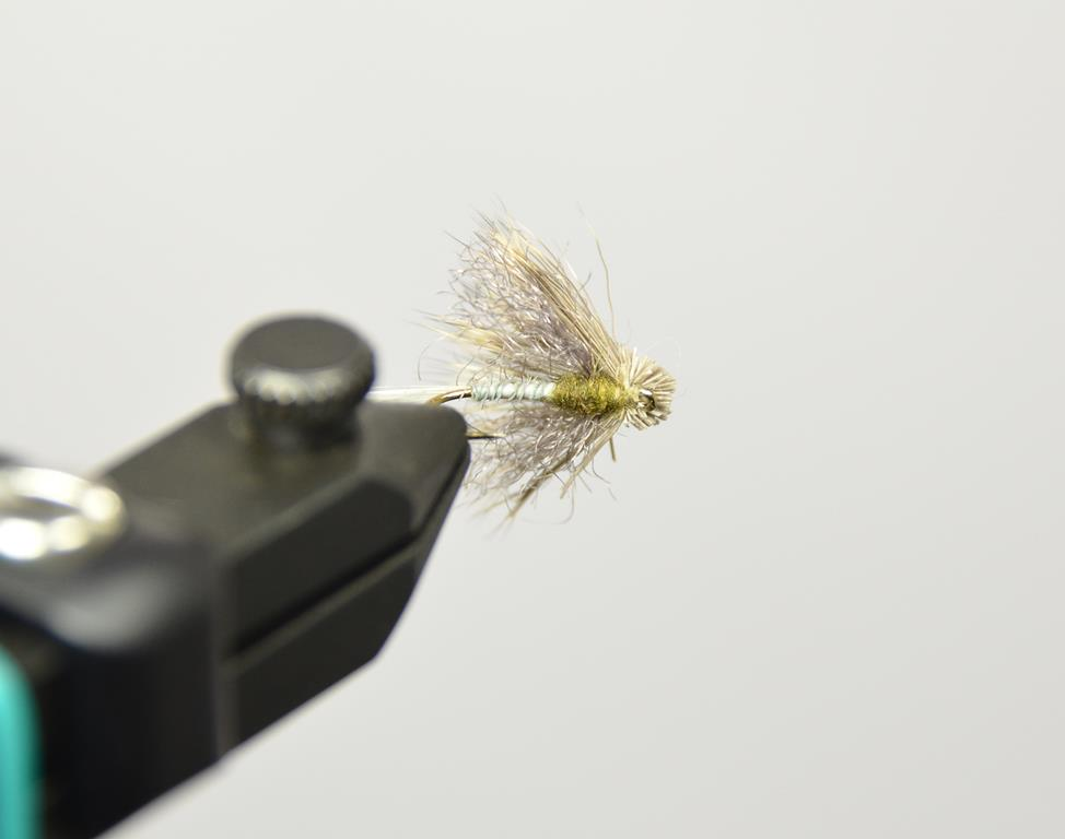 Galloup's Found Link BWO bottom