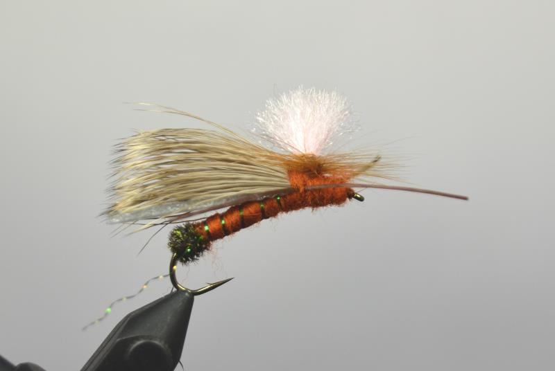 gould's half down salmonfly