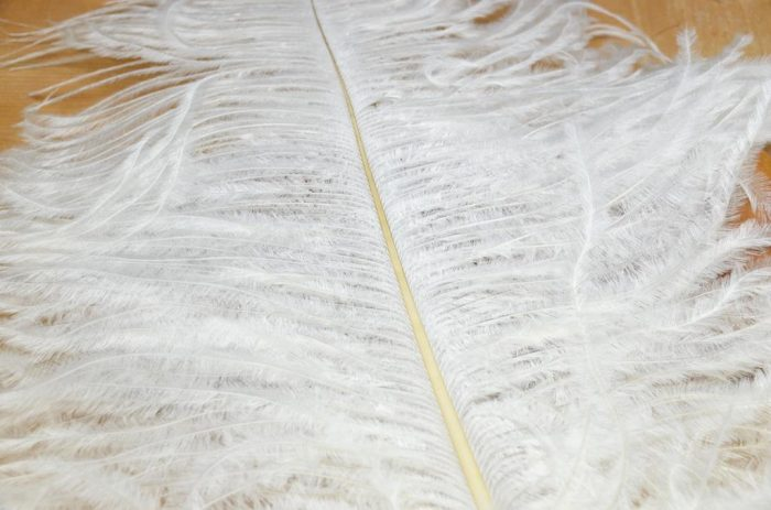 ostrich plumes white
