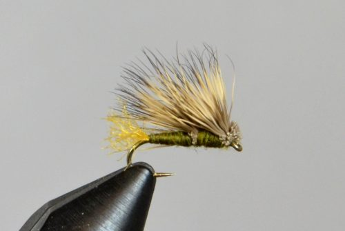 galloup's double wing caddis olive