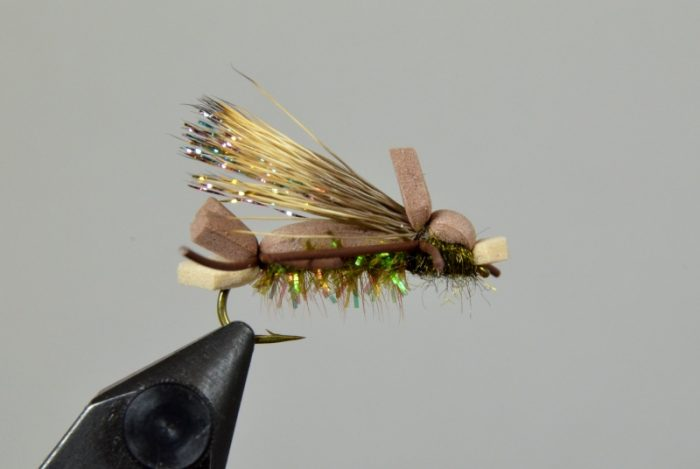 amy's ant olive