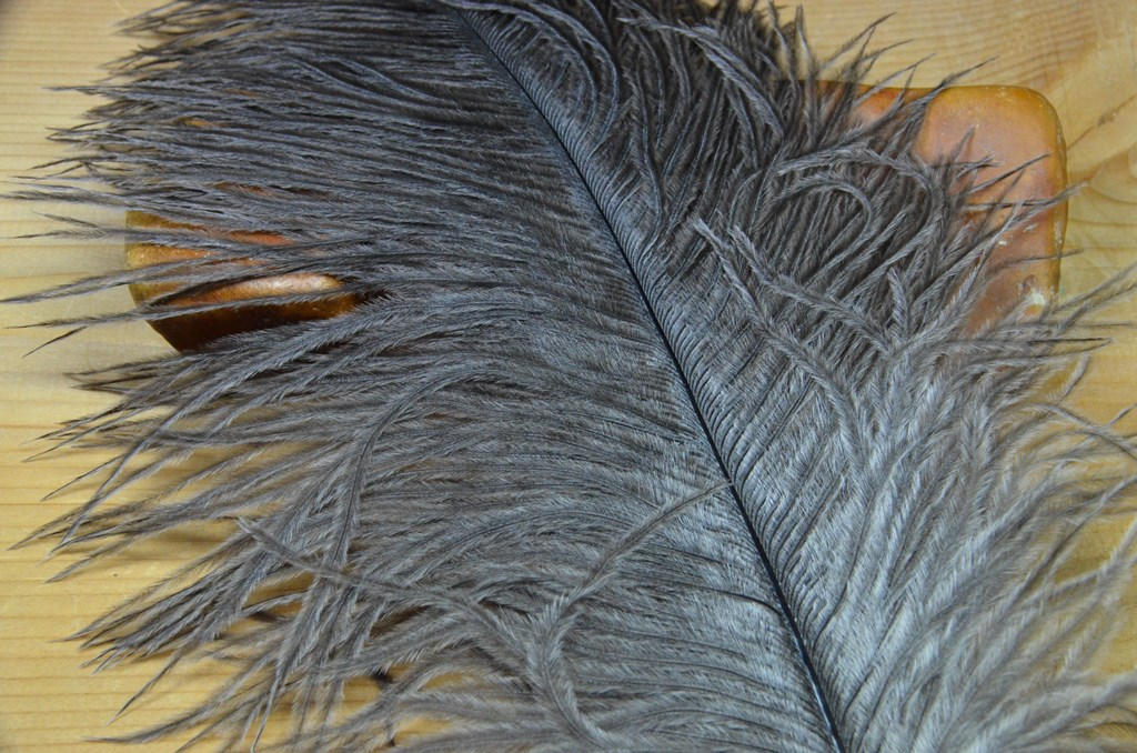ostrich plume natural gray