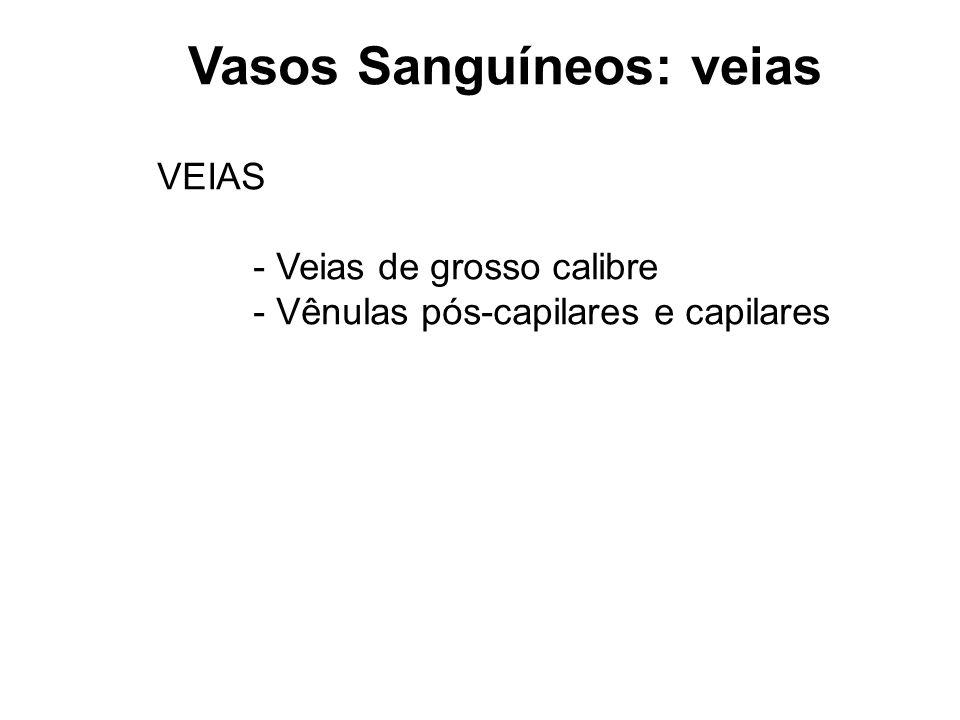 Junqueira Histology Ppt