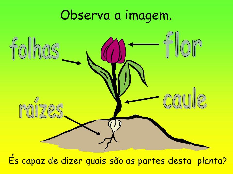 parts of a flowering plant diagram 1994 ford explorer radio wiring ciências as partes de uma planta. - ppt carregar