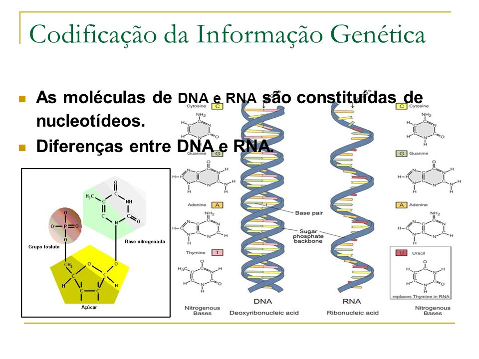 And Rna Pictures Atp Dna