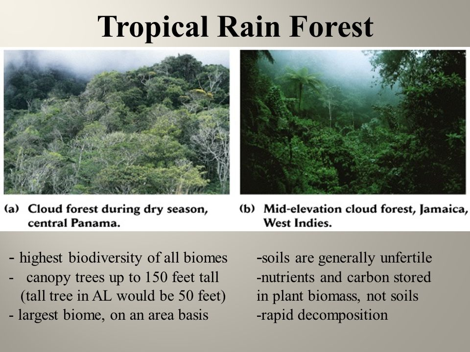 diagram of a tropical forest mustang wiring chapter 6 terrestrial biomes - ppt video online download