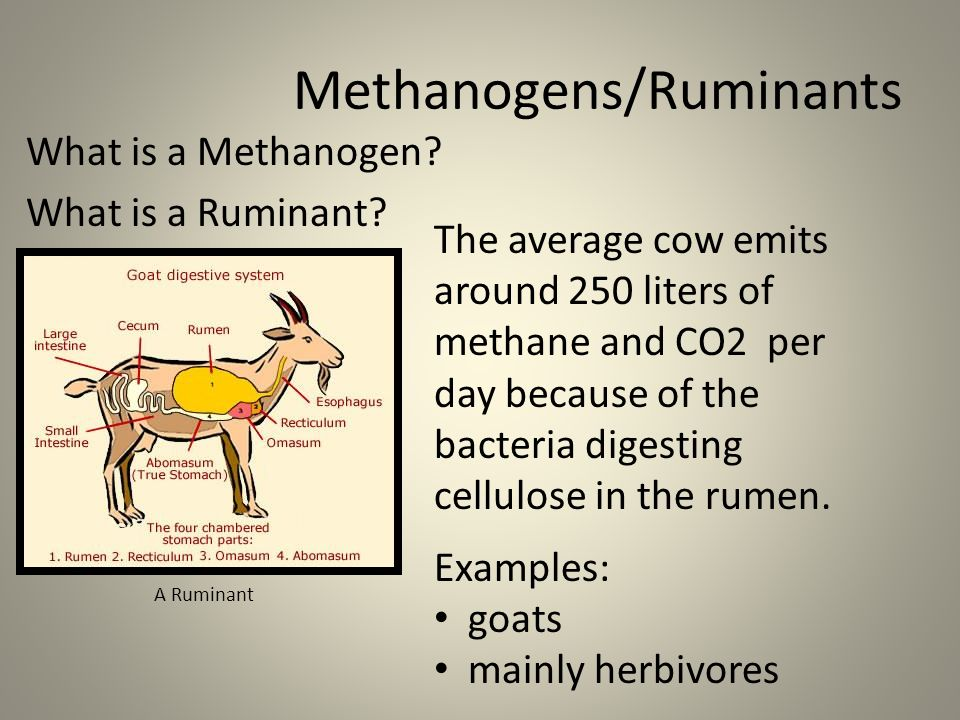 Bacteria And Symbiotic Relationships Ppt Video Online