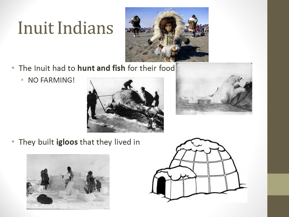 Alaska Native Plants And Animals