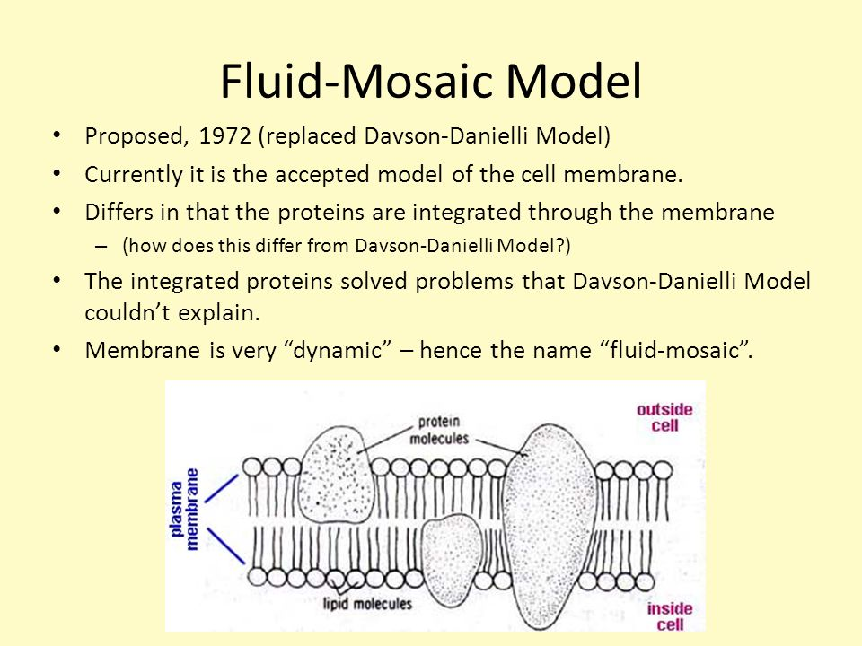 diagram of fluid mosaic model cell membrane yamaha warrior 350 wiring 1.3 mr. mcgee, ib biology (hl) - ppt video online download