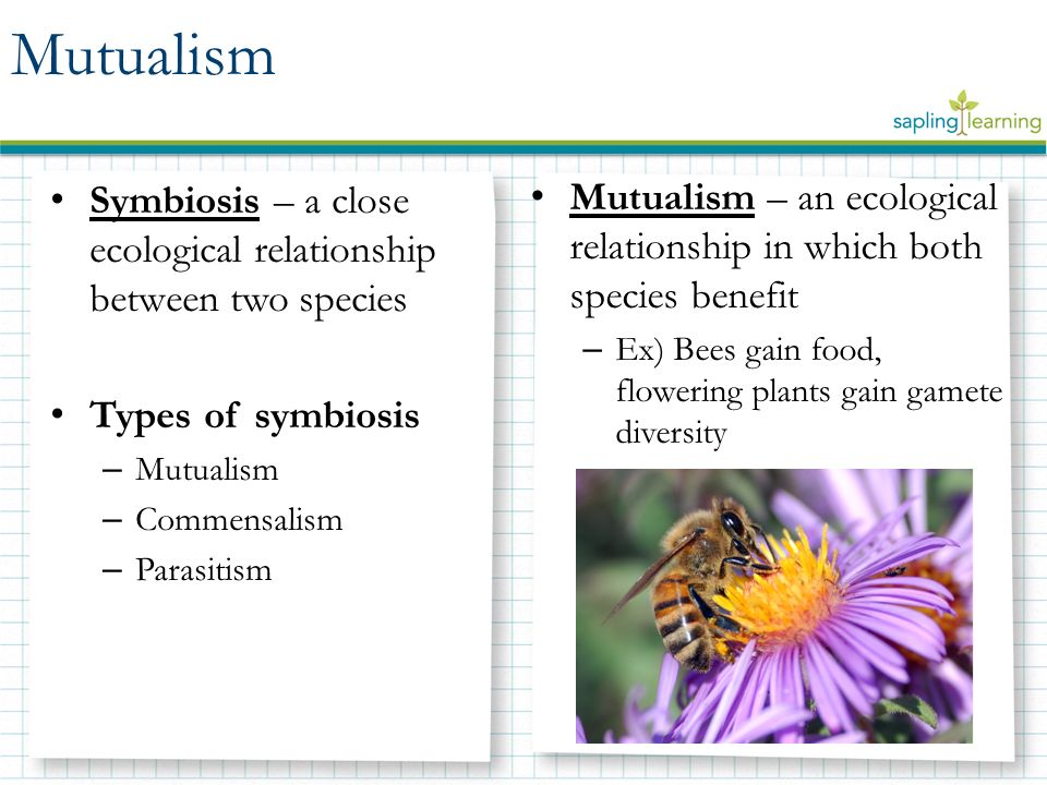 Symbiosis Mutualism Commensalism Parasitism Learning