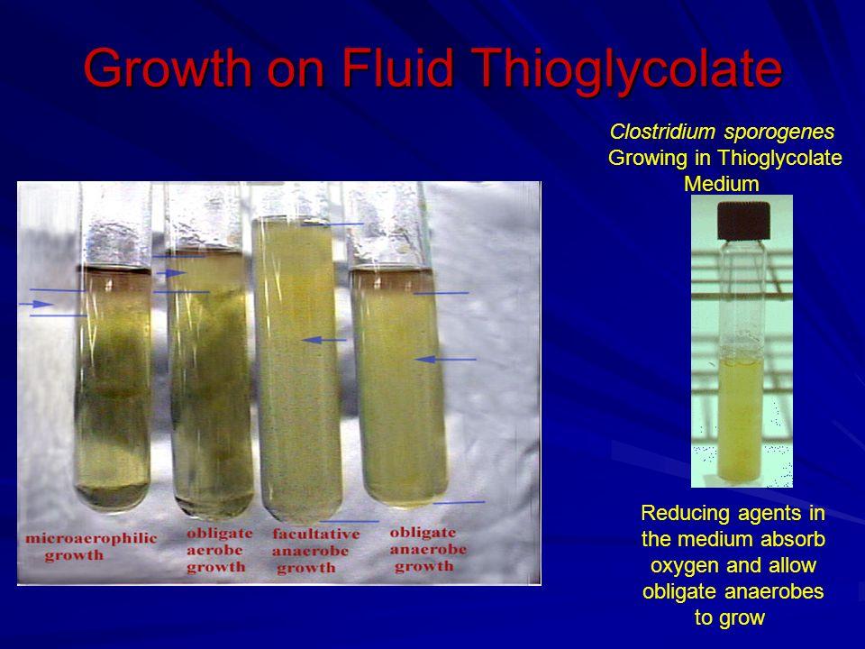 Clostridia Large Gram Positive Ppt Video Online Download