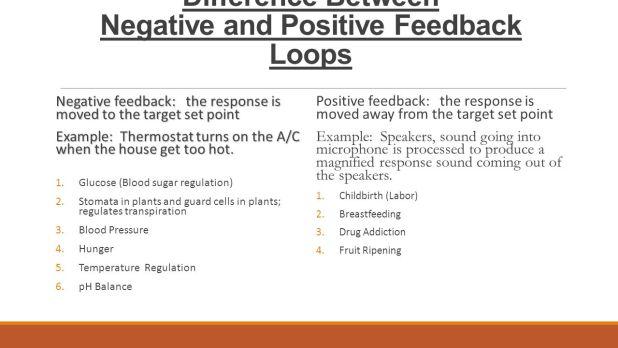 Homeostasis Regulation And Feedback Loops Worksheet Answers – Homeostasis Worksheet