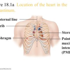 Inner Heart Diagram Hunter Fan Wiring Switch Chapter 11 The Cardiovascular System - Ppt Video Online Download