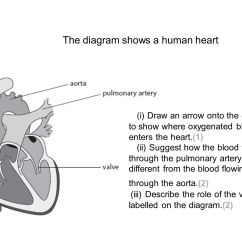 Heart Diagram Outside Gm Starter Relay Wiring B2 Topic 3 Stick In The Ppt Video