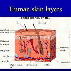 Skin Cross Section Diagram Oil Burner Parts Biochemistry Of Biochemie KŮŽe - Ppt Download