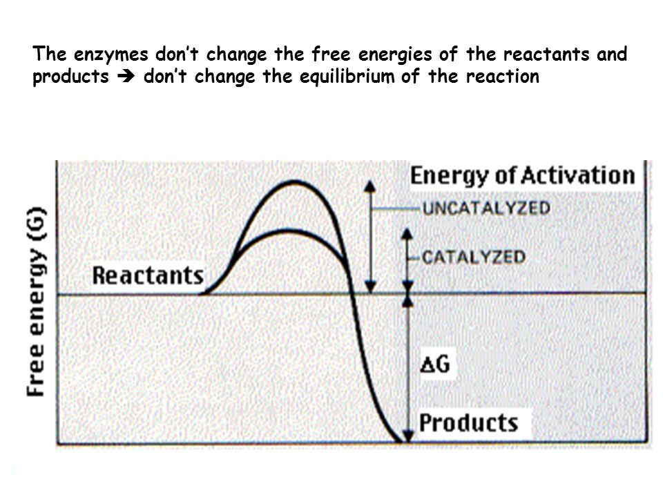 Enzymes Nearly all the reactions of the body are mediated