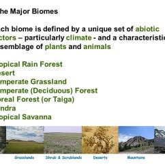Deciduous Forest Diagram Problems Based On Venn Diagrams Examples: Arizona Desert Organisms Can Tolerate - Ppt Video Online Download