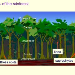 Tropical Rainforest Diagram Home Wiring Diagrams Uk Layers Of The - Ppt Video Online Download