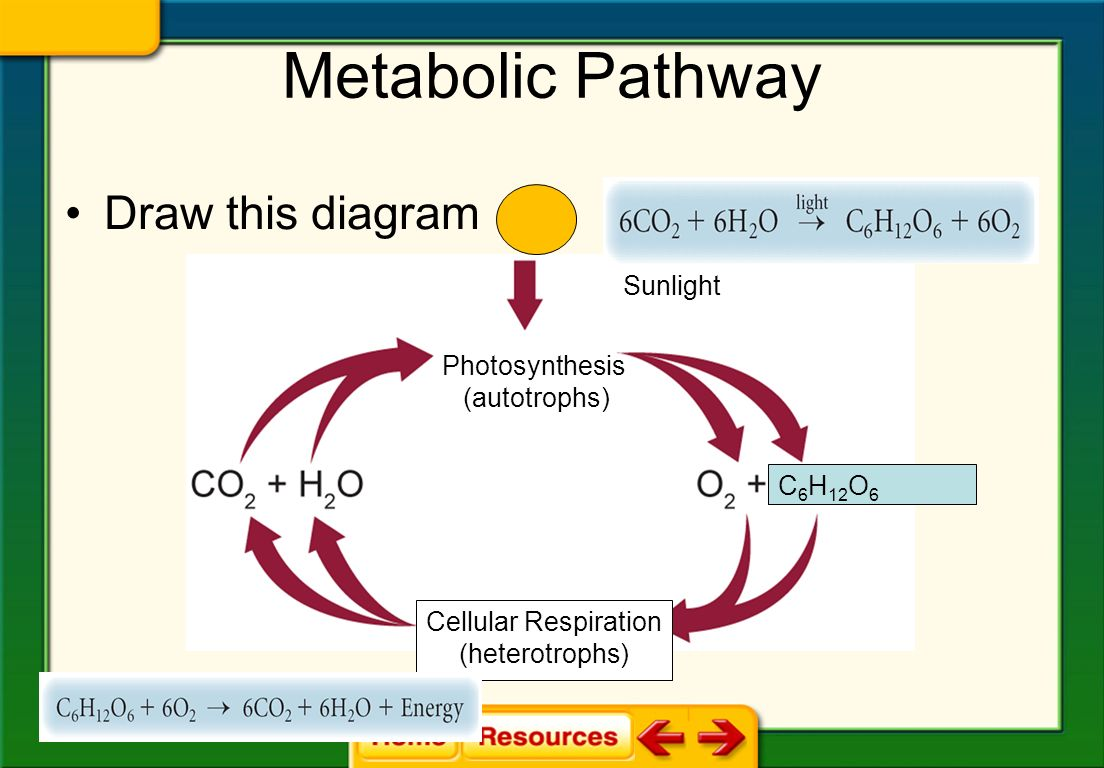 photosynthesis and cellular respiration diagram volvo xc90 radio wiring chapter 8 energy ppt download