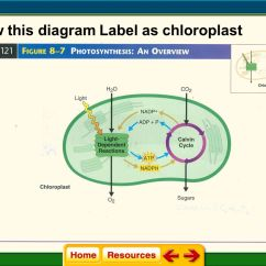 Chloroplast Diagram With Labels Audi A6 Wiring Chapter 8 Cellular Energy Ppt Download