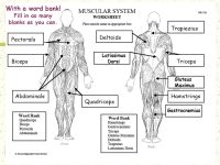 Muscular System 7th Grade Science Worksheet. Muscular ...