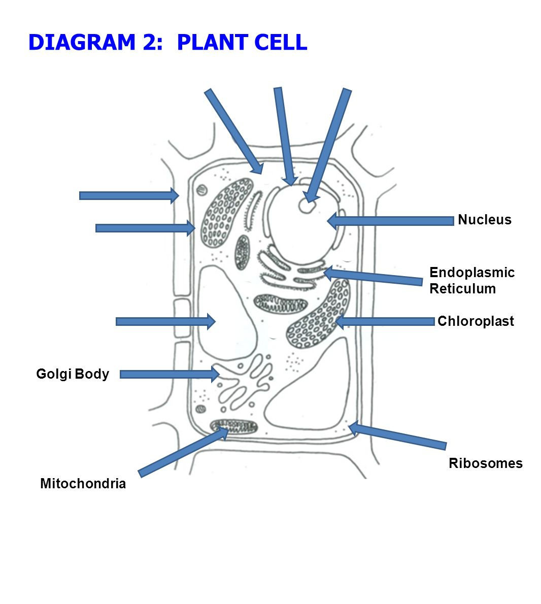 endoplasmic reticulum animal cell diagram gretsch wiring notes ppt download