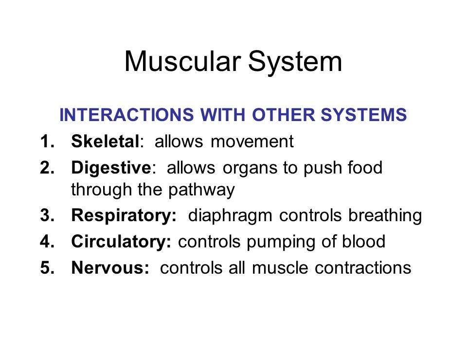 The Human Body Systems Ppt Download