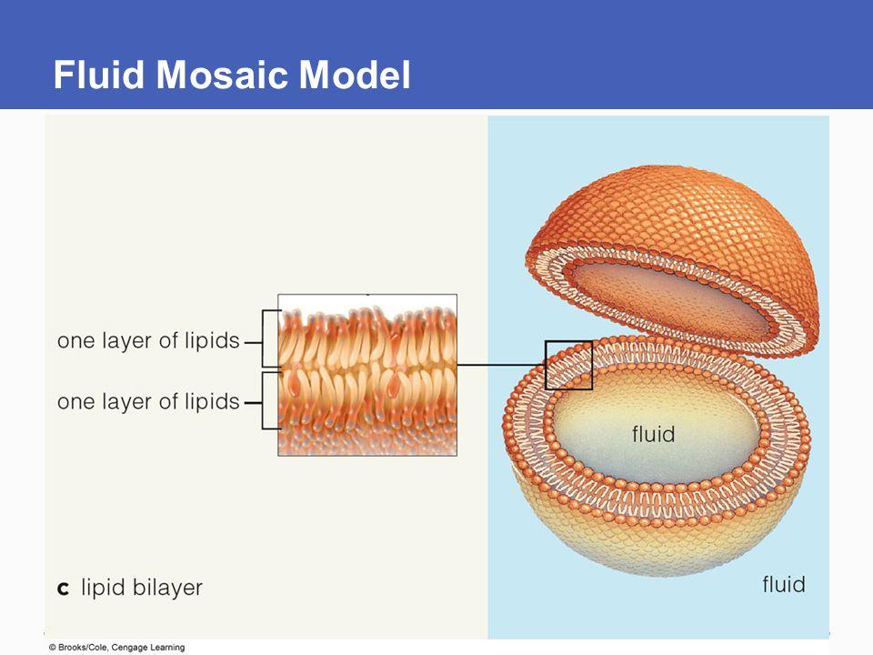 Fluid Mosaic Model Of Plasma Membrane - Idee per la decorazione di