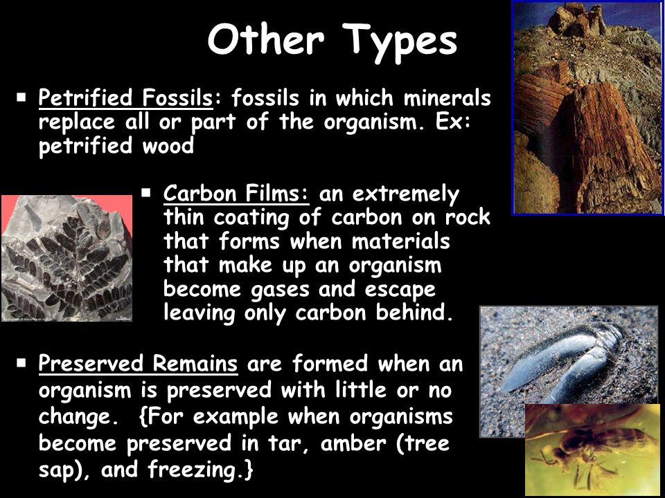 The Rock And Fossil Record Ppt Video Online Download