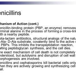 Gram Negative Cell Wall Diagram 66 Block Wiring 25 Pair Beta-lactam Antibiotics - Ppt Download