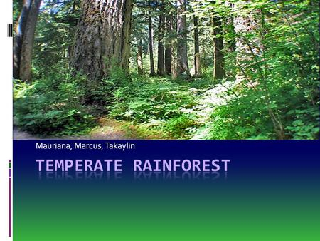 evergreens dominate this climate due to their ability to tolerate the long. Temperate Deciduous Forest Ppt Video Online Download