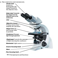 Compound Microscope Diagram And Functions Dayton Gas Heater Wiring Ch 3 Microscopy Identification Of Microbes Ppt Download