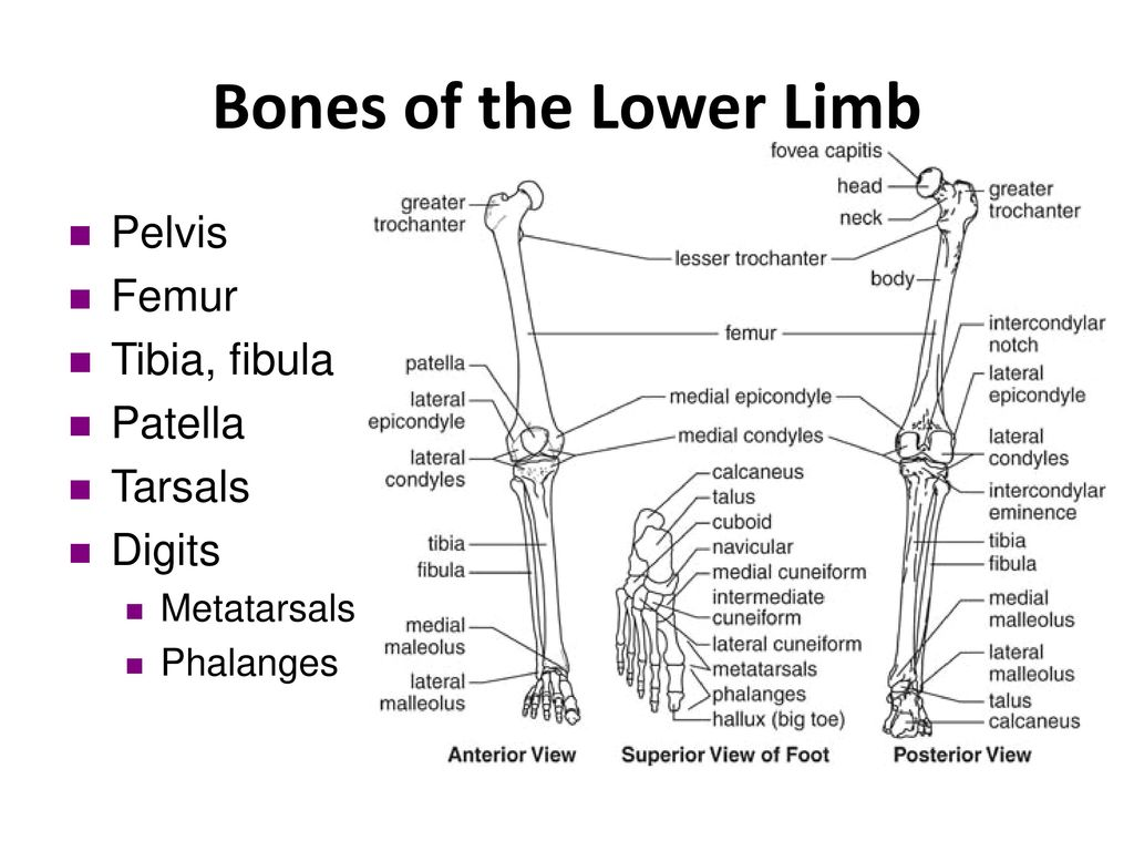 Fractures Diagram