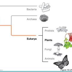 Plants And Animals Venn Diagram Of Protists 2000 Eclipse Headlight Wire Chapter 21 Plant Evolution Ppt Video Online Download