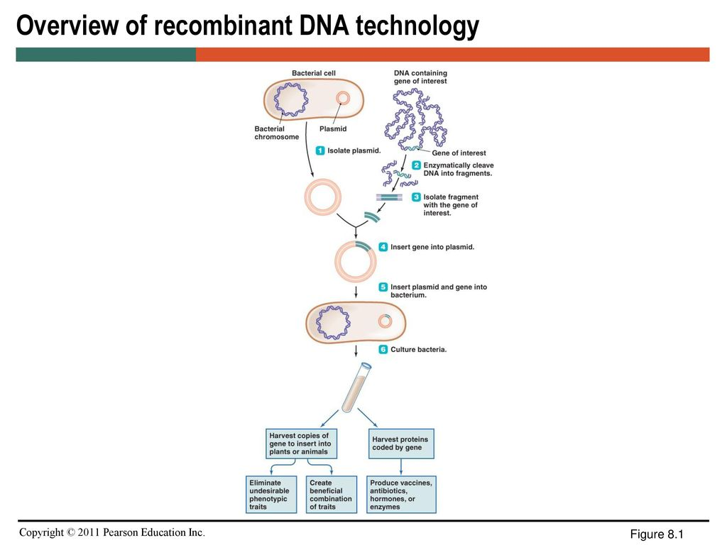 Hd Images Of Rebinant Dna Technology