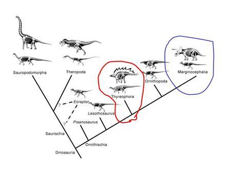 GEOL 240 The Dinosaurs: Thyreophora. What is a Thyrephora