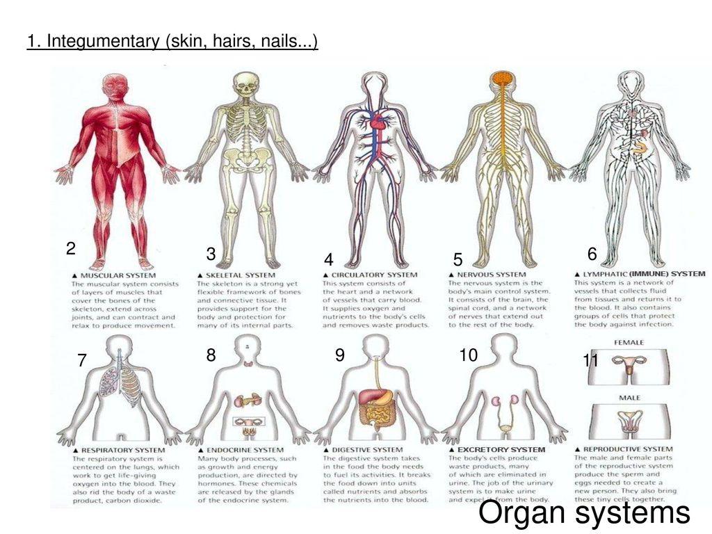 Human Anatomy Amp Physiology Introduction