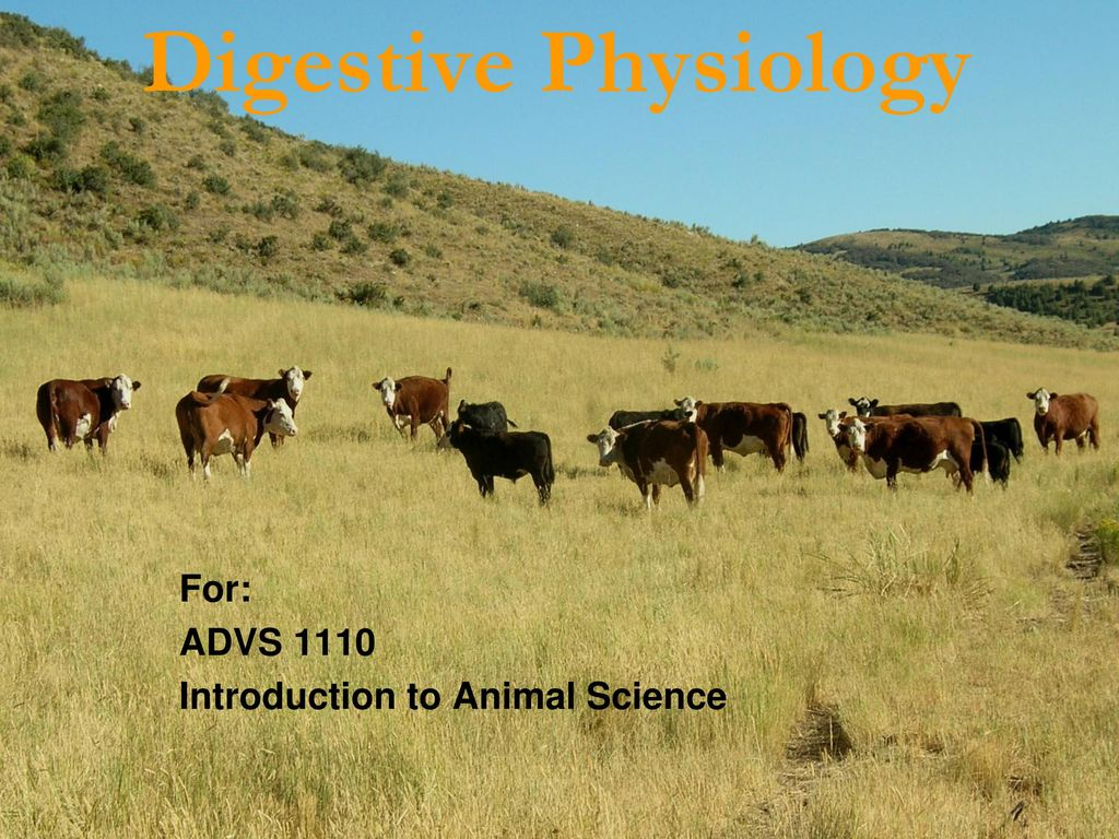 For Advs Introduction To Animal Science