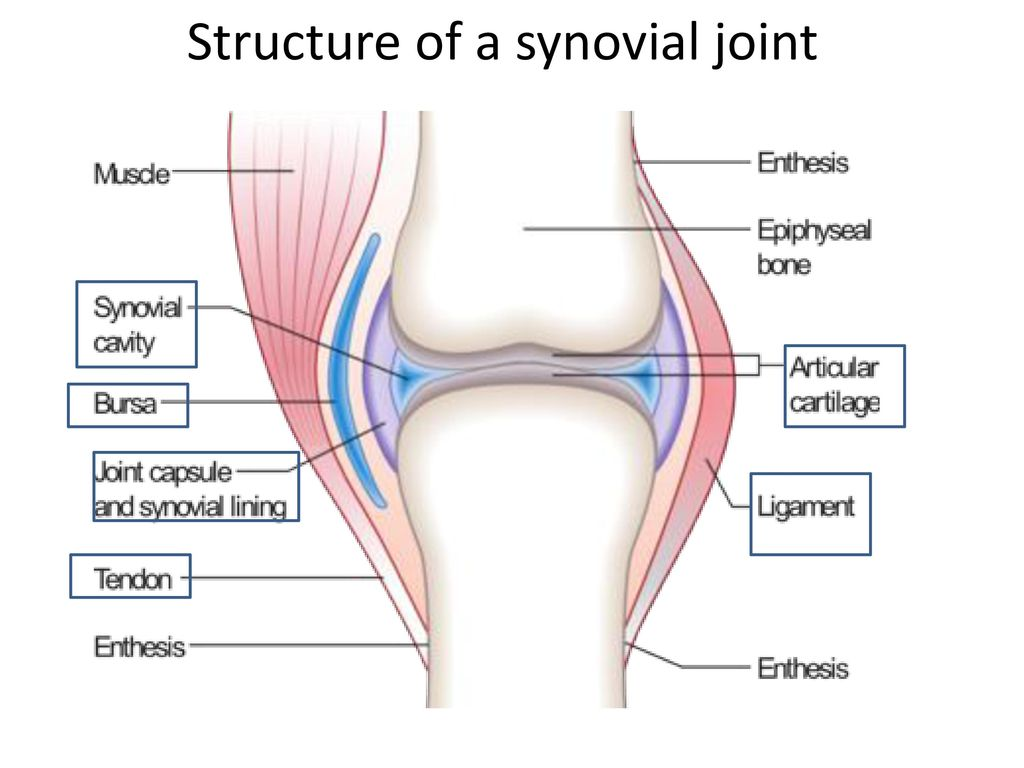 movements allowed by synovial joints diagram 1995 club car golf cart wiring ib sehs ppt download